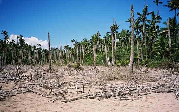 Top 10 Factors That Cause Environmental Damage