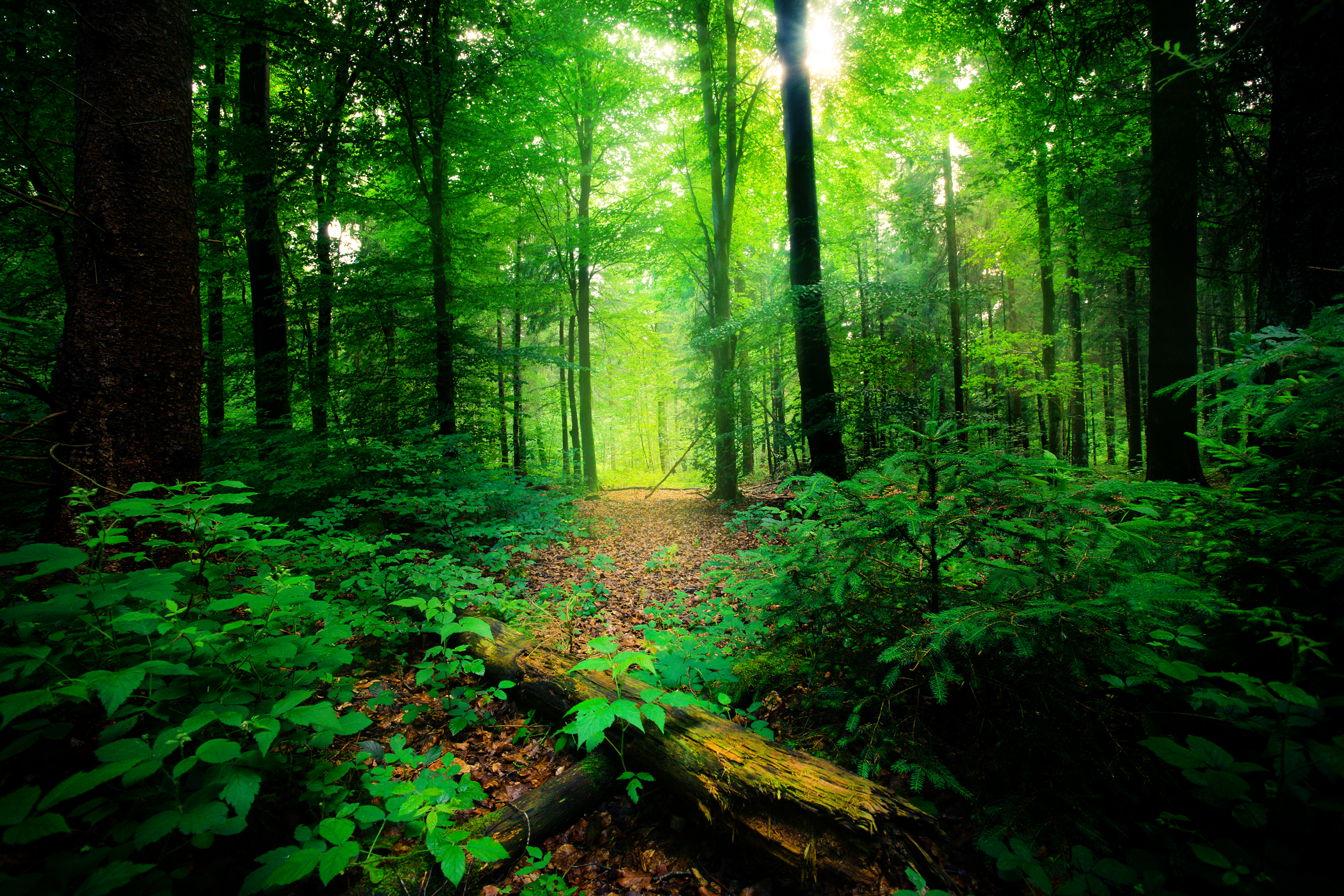 FOREST_BY_NIHAL_JABIN