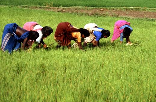 indian agriculture before independence Ensured that india–before the arrival of the with indian agriculture being advanced indian economic policy after independence was influenced.