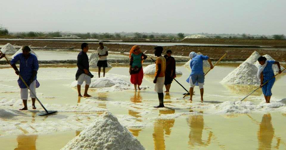 Volunteers at work ...collecting and piling up salt..near Manthan , Rajasthan during the 4th Orientation Camp for SMILE Inturnships