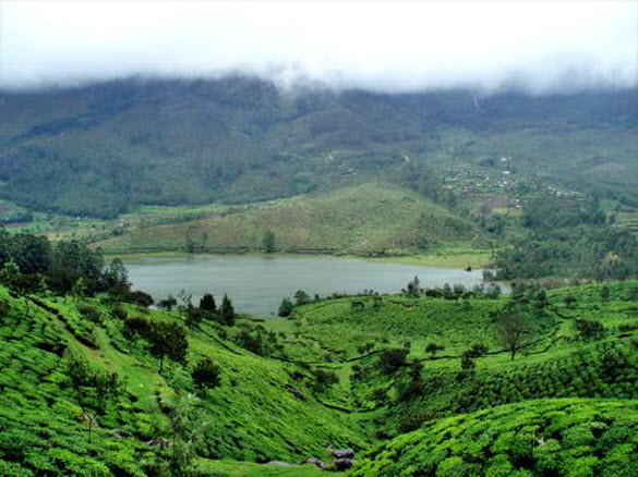 Greenish_Photography_Munnar_Kerala_Tours_Travel_10