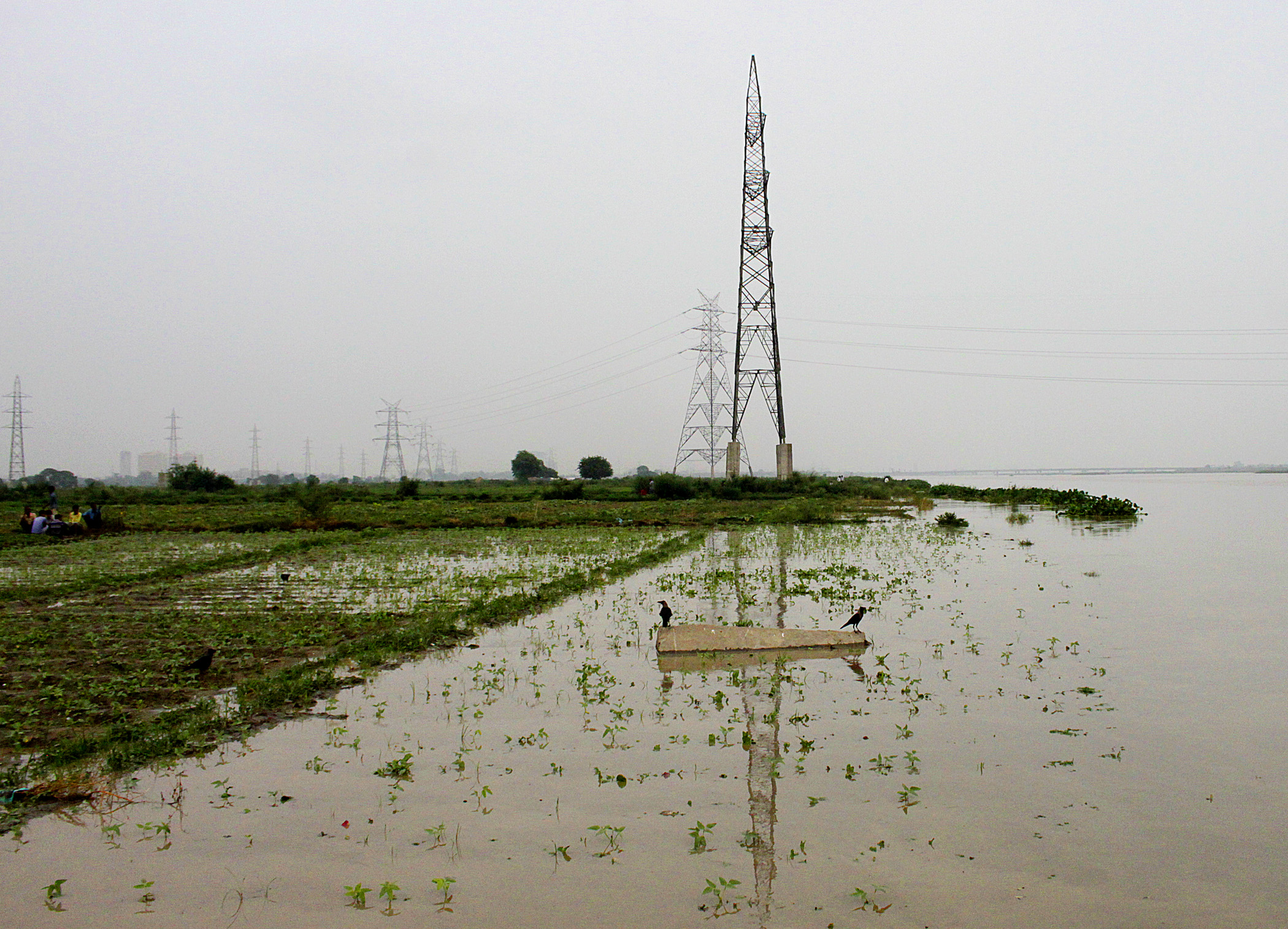 Flood at farms near Yamuna River