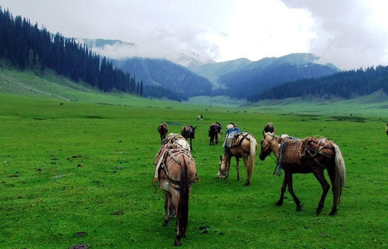 kashmir-valley-hourseride