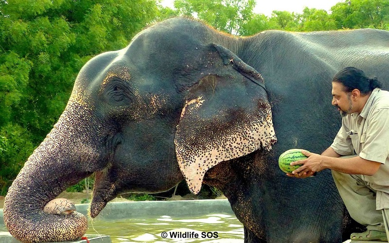 Raju being served fruits by WSOS co-founder, Kartick Satyanarayan