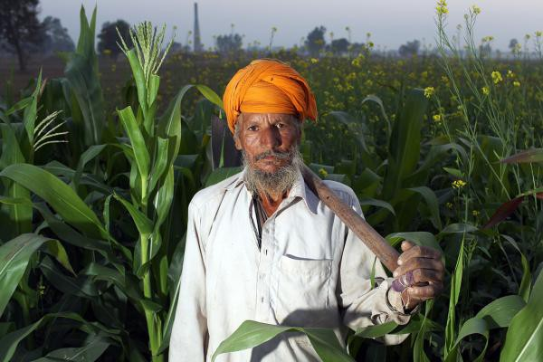 sikh farmer in malwa region of punjab