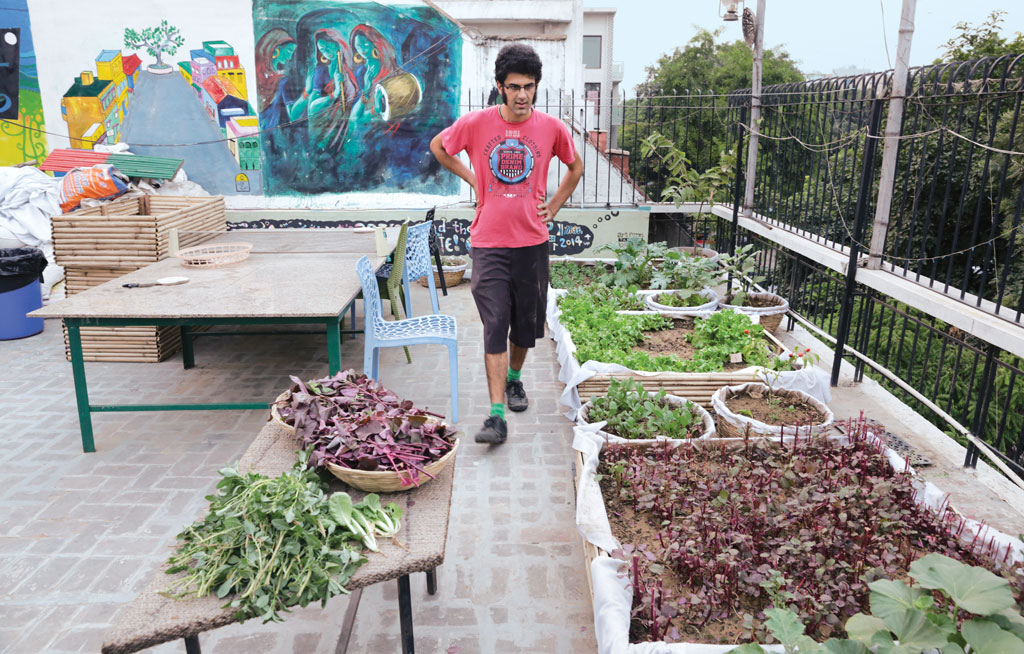 How Urban Gardening Is Growing Because Of These Organic