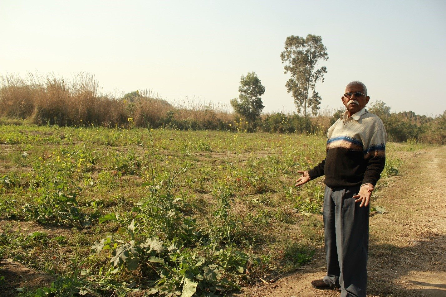 "Anoop Singh, a 75-year-old farmer, bemoans his lost harvest of mustard. ""We received information a night before DDA was to come. What can we do in one night? We pleaded them to give us a few more days so we can at least cut the harvest, but our requests fell on deaf ears."""