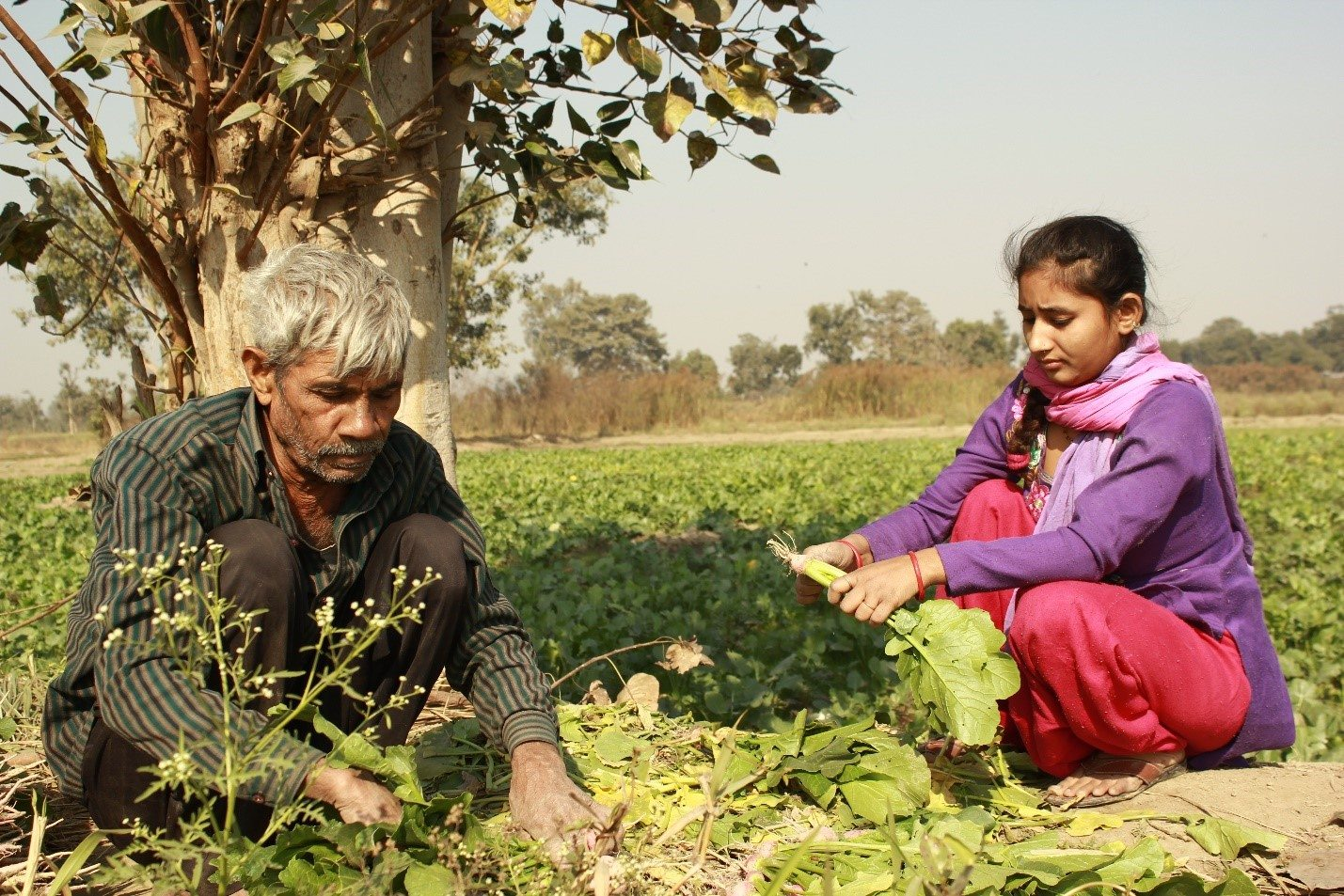 "14-year-old Sahiba helping her grandfather cut spinach leaves. ""They ran bulldozers over our other harvests but left the marigold patch untouched as they say Delhi needs more flowers. Is this a joke? Delhi needs flowers, but do we not need food?"""