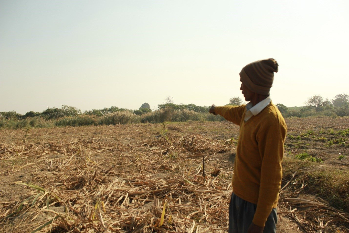 Keeno, a 52 year old farmer from Belagaon, showing the destroyed sugarcane harvest of his field.