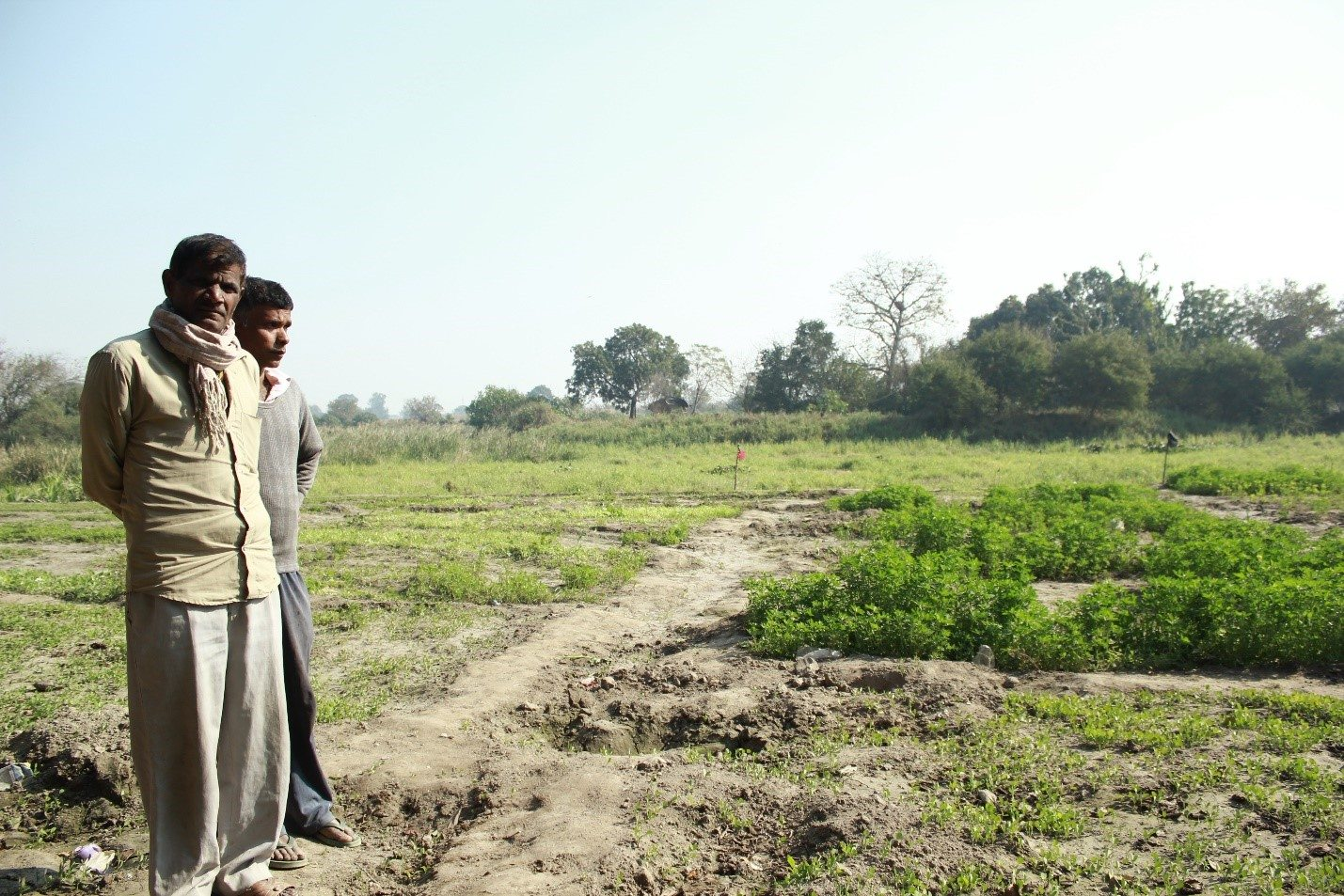 Kamal Singh (in the grey sweater at the back), the informally elected Head of the settlement, looking over his ruined field of spinach.
