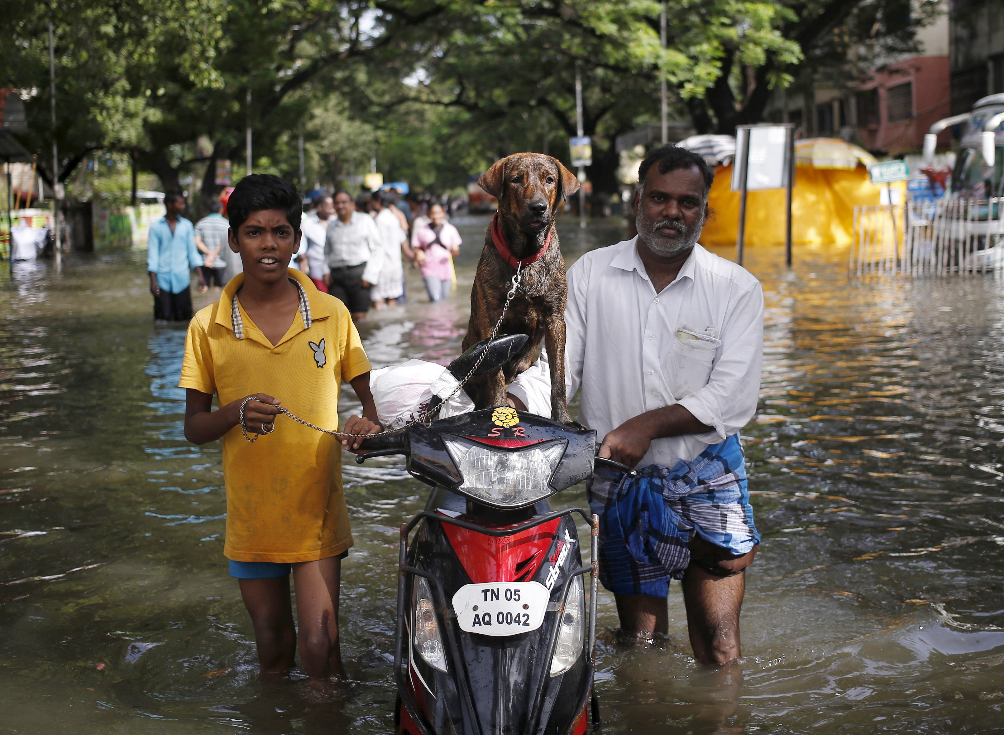 Residents along with a dog evacuate a locality as they wade through a flooded street in Chennai, India, December 3, 2015. REUTERS/Anindito Mukherjee - RTX1WZP6