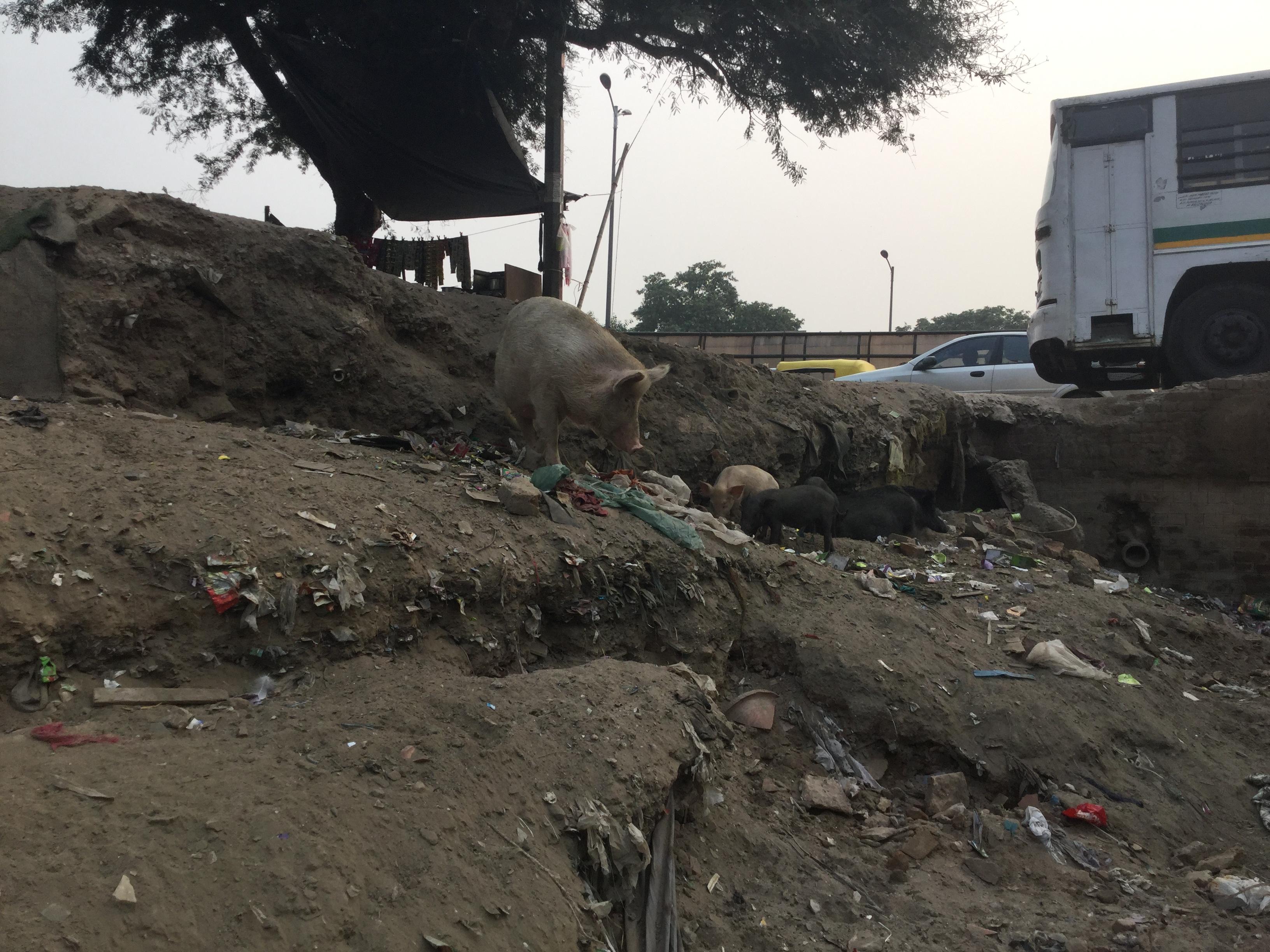 sarasvati basti delhi slum