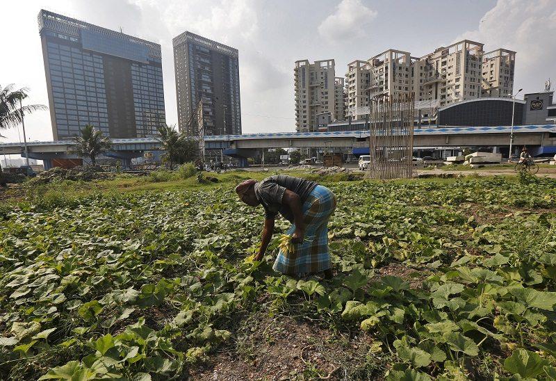A farmer plucks pumpkin flowers from his field in Kolkata, India, February 28, 2016. To match INDIA-BUDGET. REUTERS/Rupak De Chowdhuri - RTS8EPY