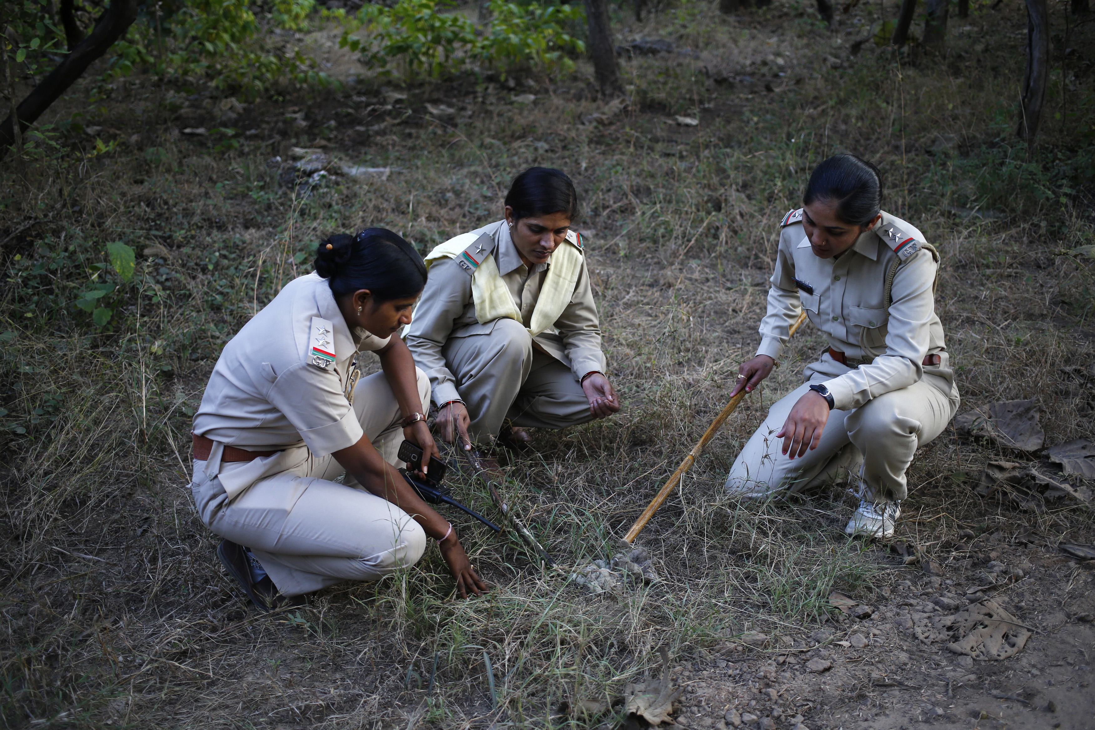 Female forest guards (L-R) Rashila Ben, Sangeeta and Darshana examine a lion faeces as they patrol the Gir National Park and Wildlife Sanctuary in Sasan in the western Indian state of Gujarat December 1, 2014. The sanctuary, which is home to Asiatic lions in India, has an area of 1,412 sq km in which female guards were employed for the first time in India in 2007. The guards fetch a monthly salary of around $148 for working almost 12 hours a day, six days a week, said one of the female guards. Picture taken December 1, 2014. REUTERS/Anindito Mukherjee (INDIA - Tags: ANIMALS BUSINESS EMPLOYMENT SOCIETY) - RTR4H9AC