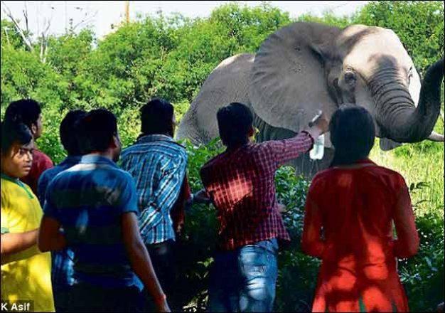 IndiaTv11897d_zoo