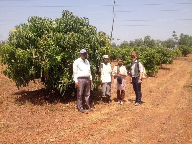 wadi_farming