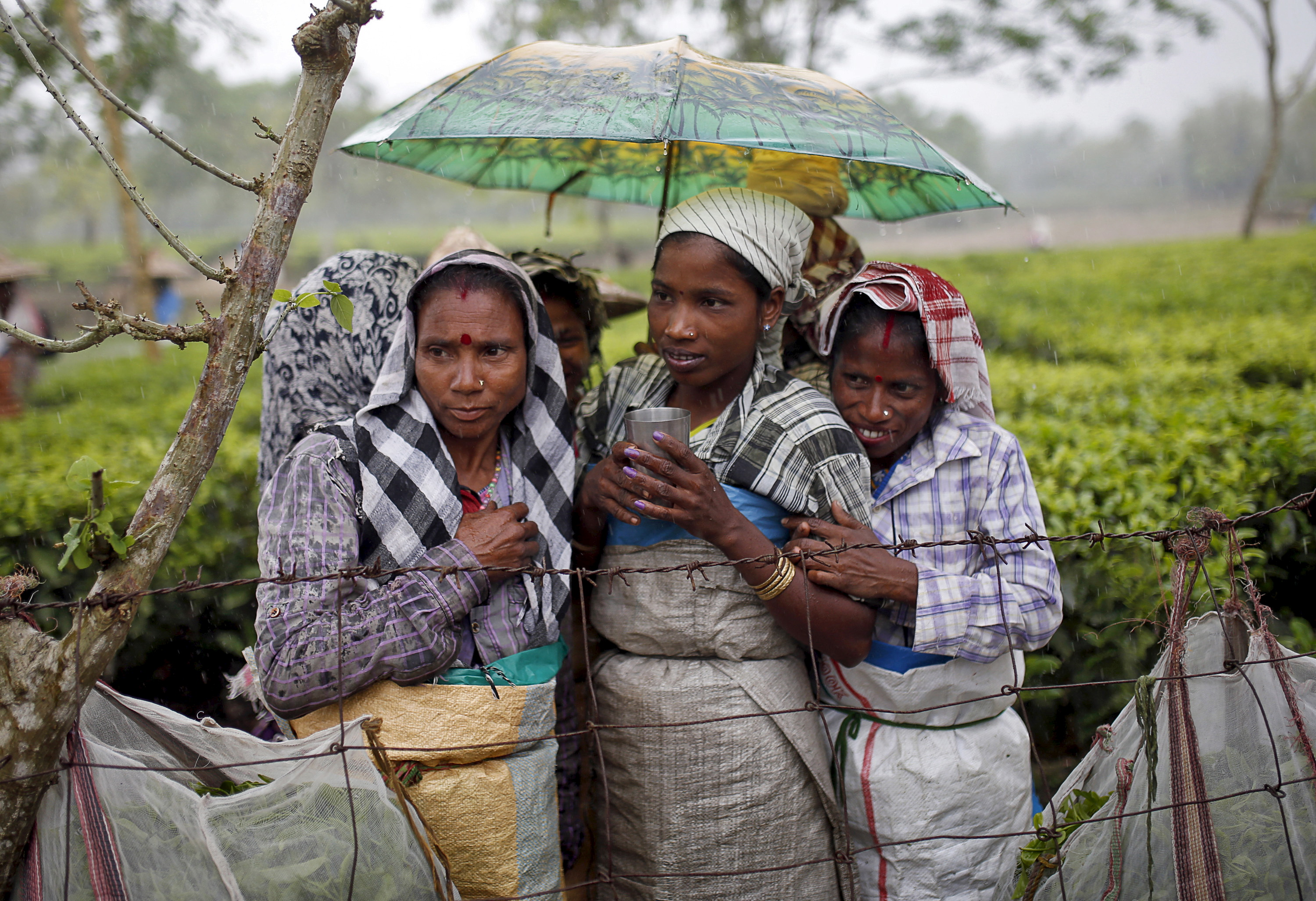 How Assam Tea Garden Workers Faced Torture And Abuse For Years