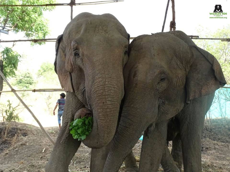 Mother daughter duo Goldie and Sylvie enjoy some snacks, post rescue