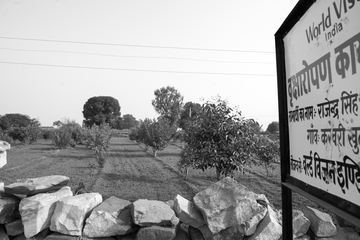 bamandeh tree plantation