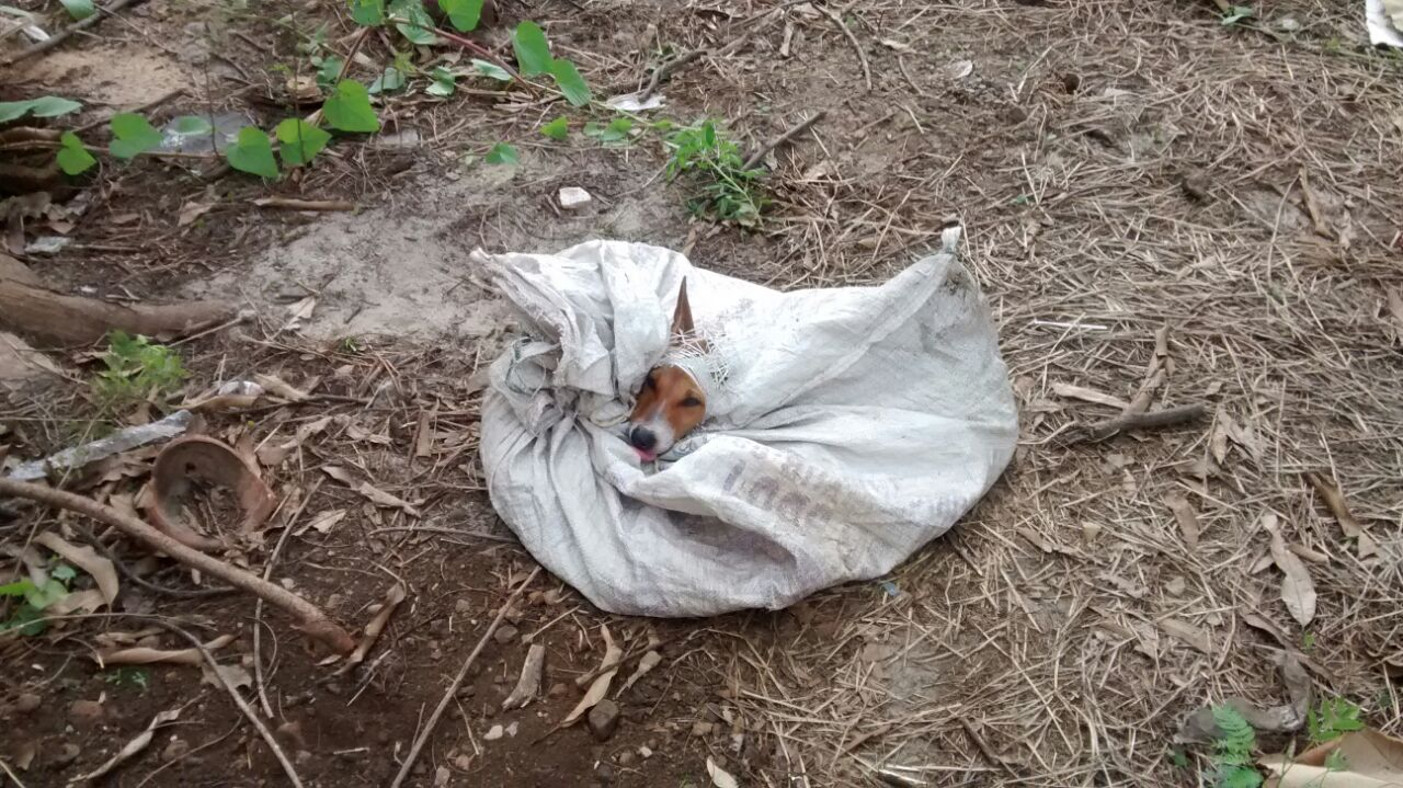 stray dog in sack