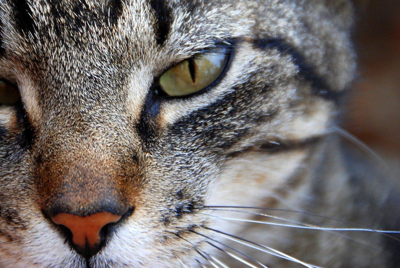 cat-646940_1280