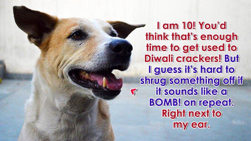 diwali-dog-1