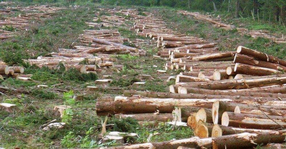 deforestation on massive scale for urban development
