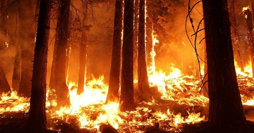 cases of wildfires are increasing rapidly