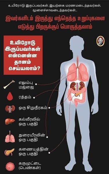 Human_Organs_Infographics