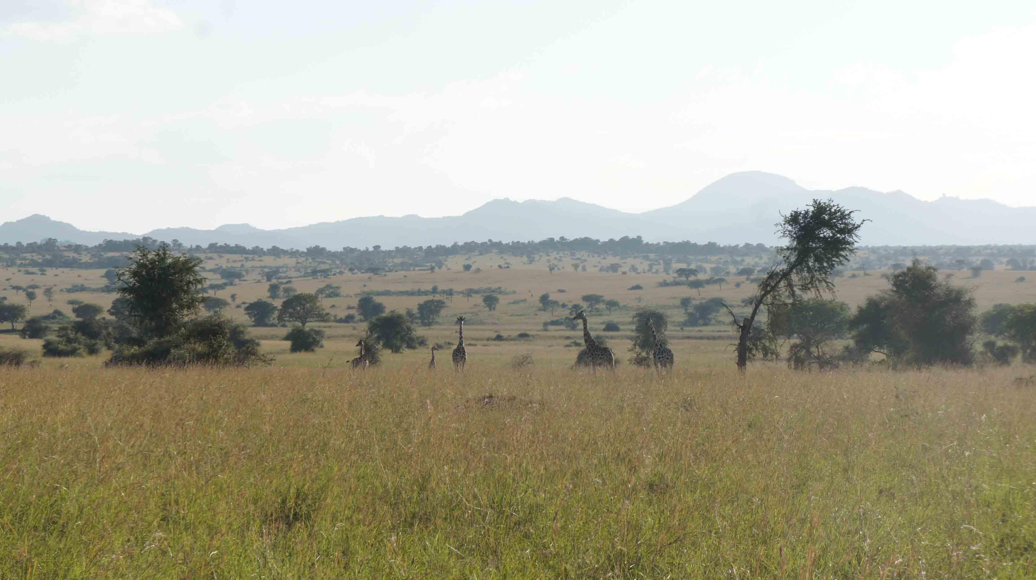 Image result for Kipedo Valley National Park