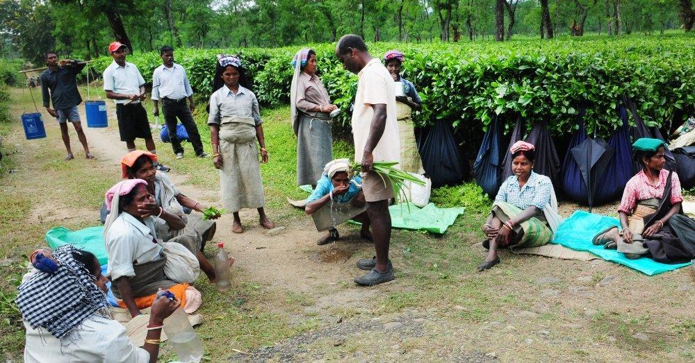 असम के चाय बगान के मज़दूर