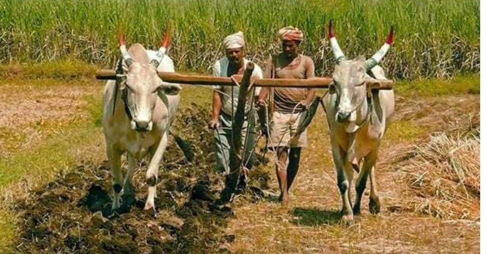 किसानों की प्रतीकात्मक तस्वीर