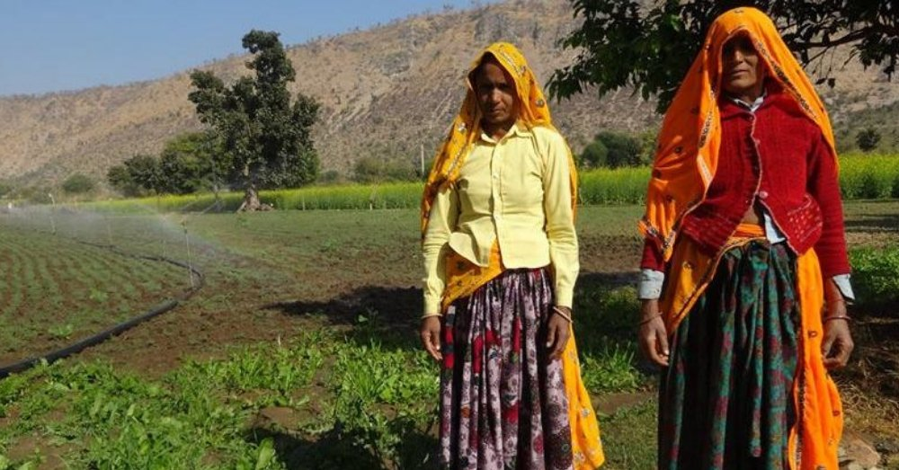 करौली, राजस्थान में स्थानीय समुदायों द्वारा बनाया गया एक जोहड़। छायाचित्र: मौलिक सिसोदिया