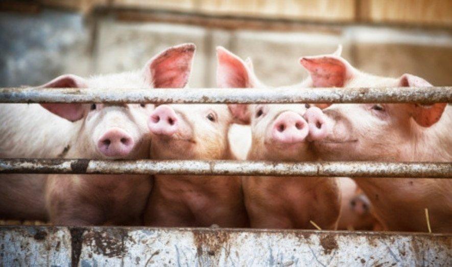 Zoonotic Diseases: How Animal Health Impacts Human Health