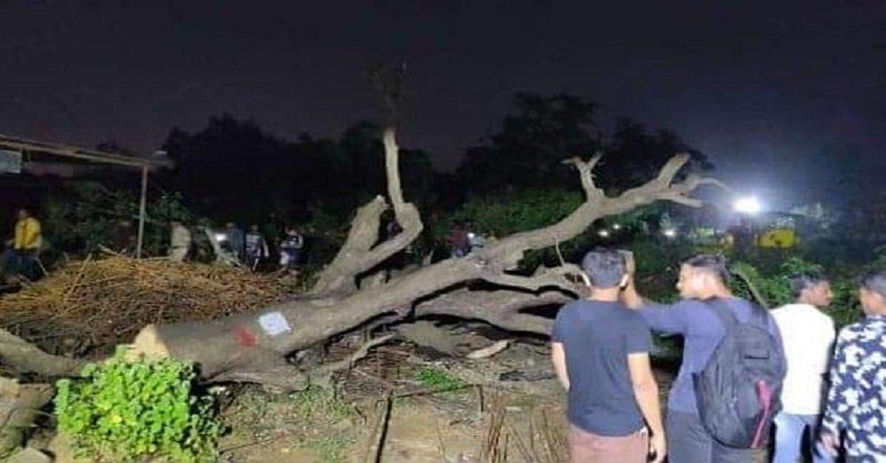 आरे जंगलों की कटाई