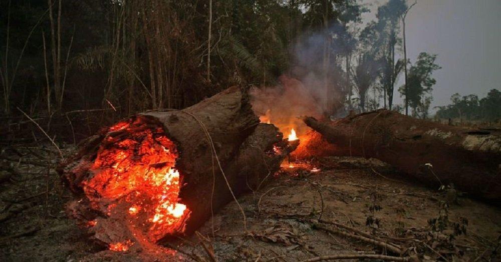 अमेज़न जंगल
