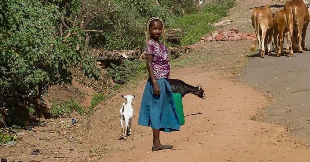 बकरी चराती लड़की