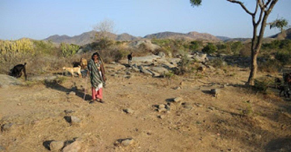 बकरी चराती देवी बाई, उबरिया फली, ग्रामपंचायत-सनवारा-R, पिंडवारा, सिरोही, राजस्थान