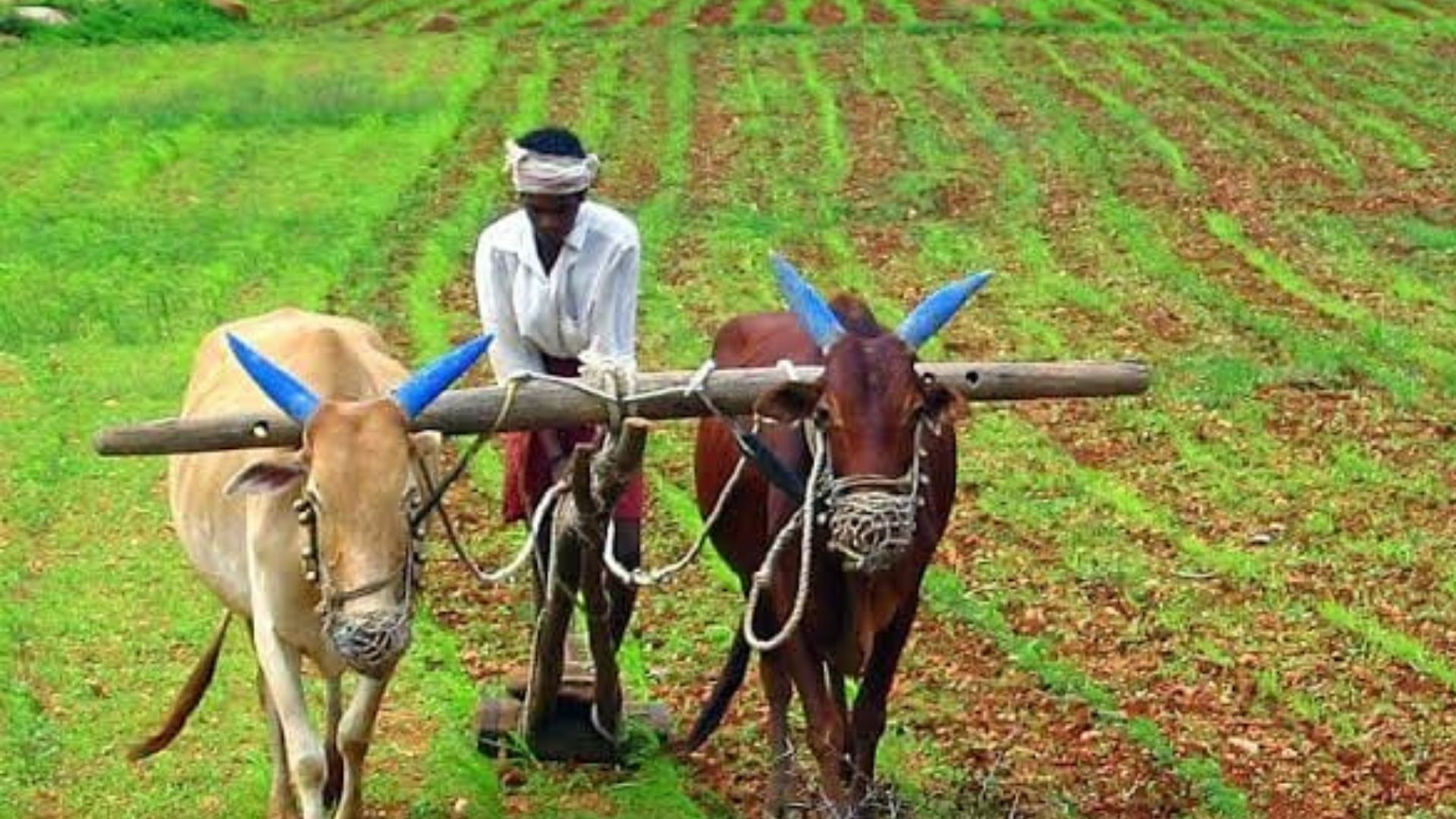 Organic Farming In The Villages Of India-6898