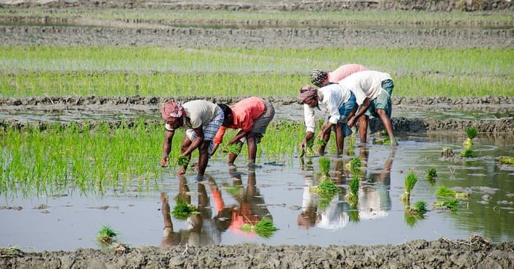 Farmers are growing paddy even in those regions which are not suitable for paddy cultivation.