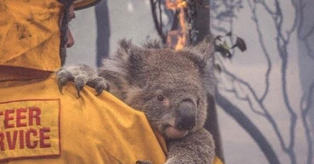 half a billion animals killed in Australia fire hindi article
