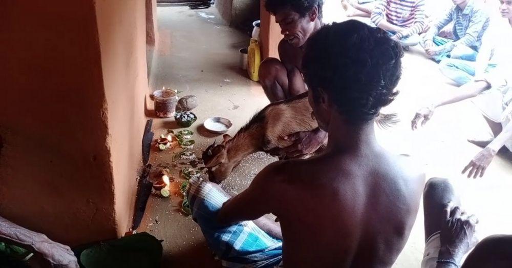 Aadivasi lives Matter