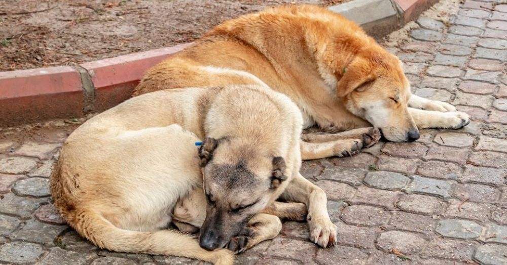 dogs killed in odisha