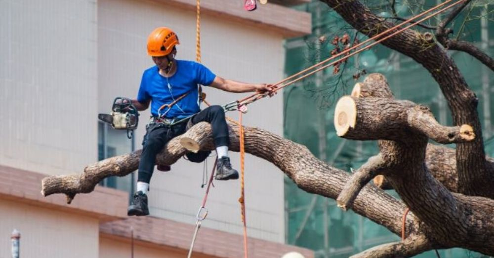 Cutting Of Trees