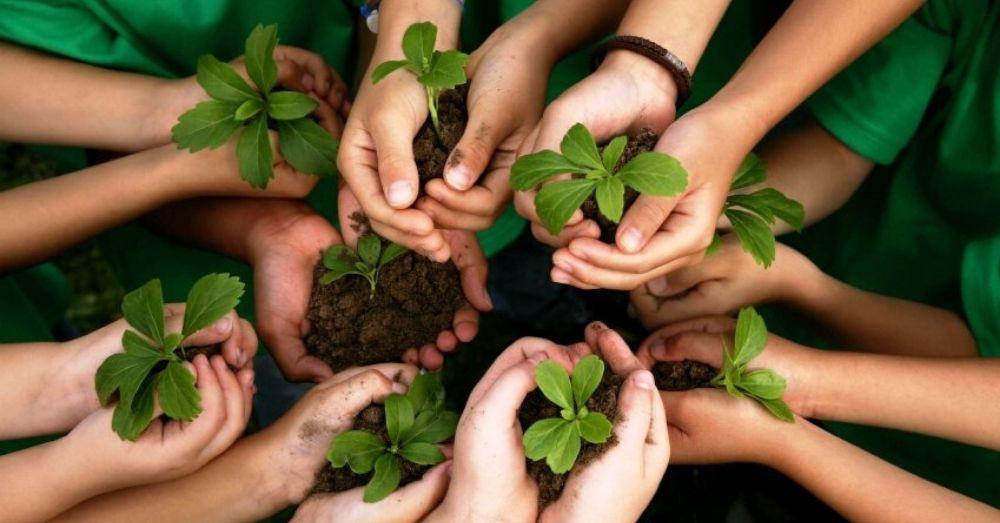 children planting saplings
