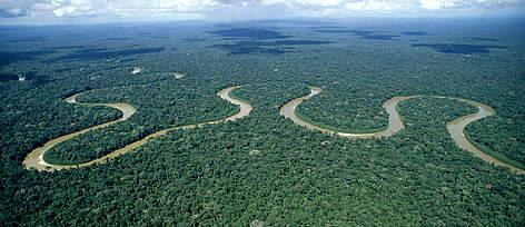 Bird's eye view of Amazon Rainforest