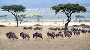The Serengeti-Mara ecosystem
