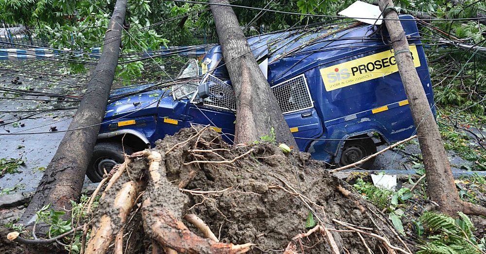 Vehicle crushed by a fallen tree
