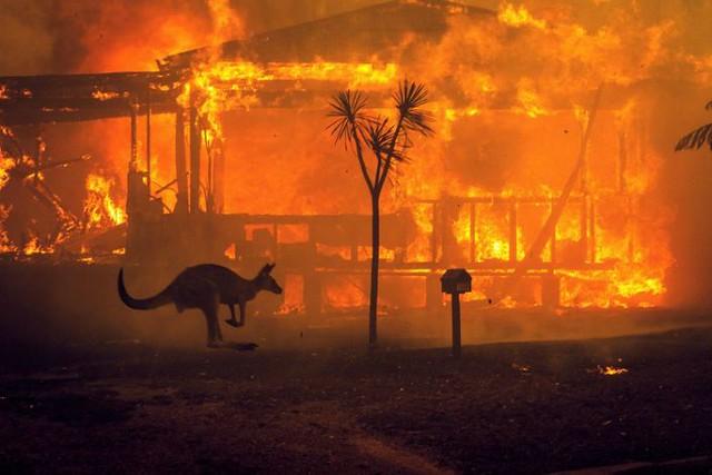 australia forest fire