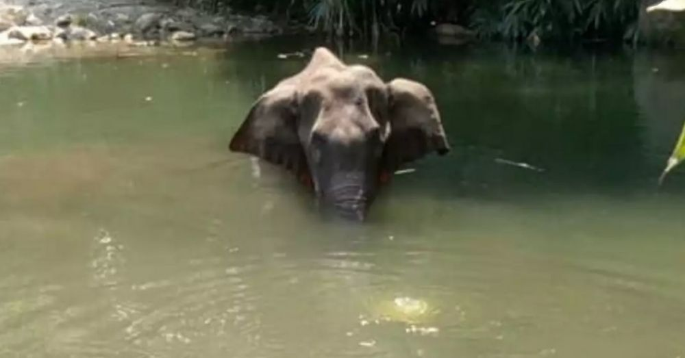 an elephant standing in water to relieve burns